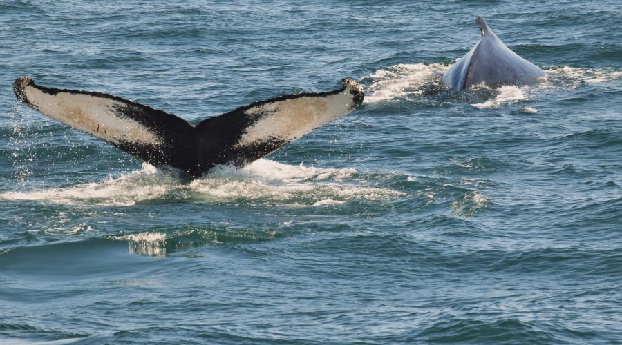 First Chance Whale Watch Image